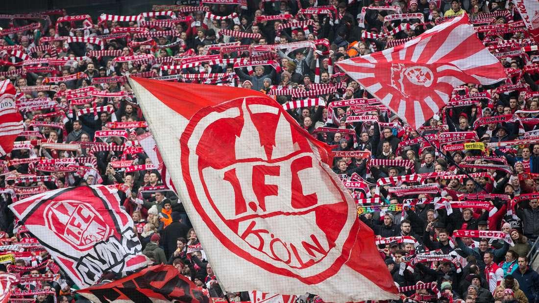 Fans des 1. FC Köln schwenken auf der Südkurve des RheinEnergie-Stadions Fahnen.