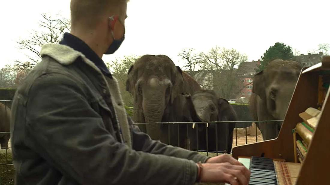Der Pianist Thelonious Herrman klimpert auf seinem Klavier, ein Elefant sieht ihm dabei zu.