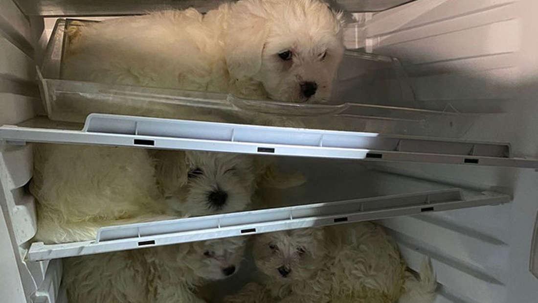Hundewelpen sitzen zusammengekauert in einem Kühlschrank.