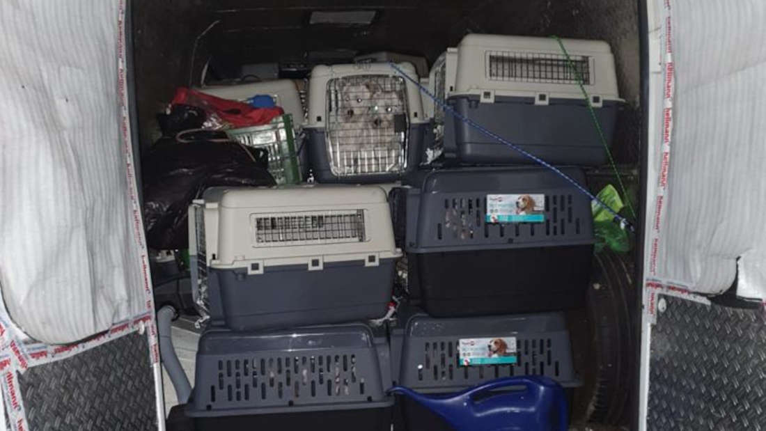 Hundewelpen in Transportboxen auf einer Ladefläche