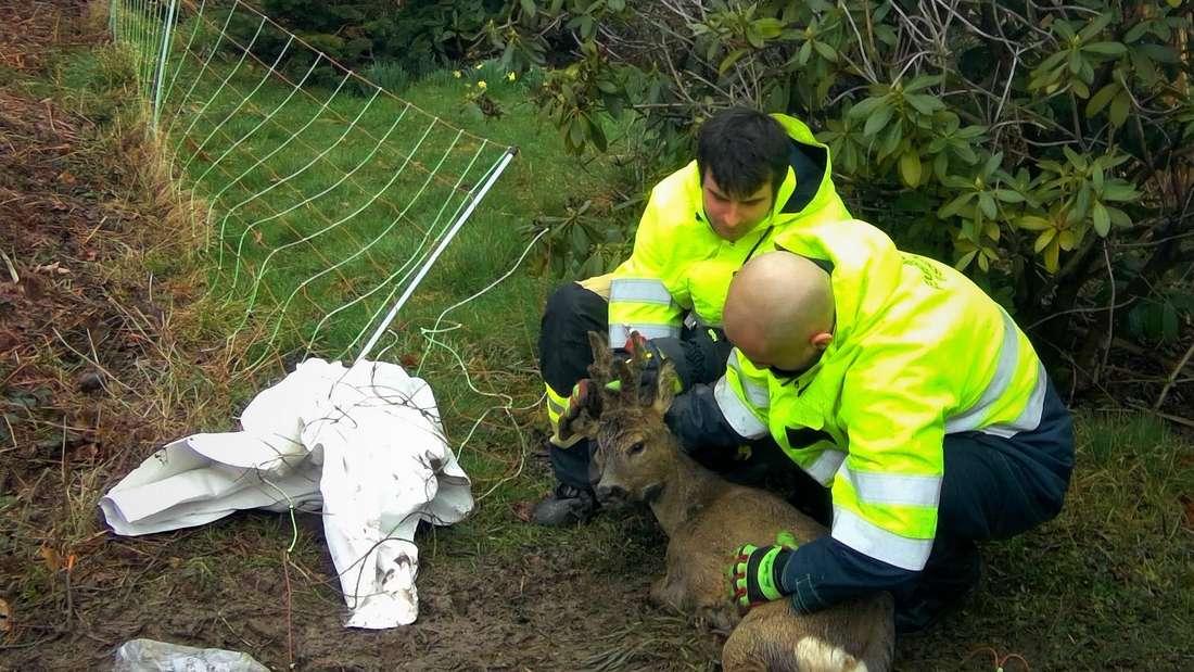 Feuerwehrleute befreien einen Rehbock aus einem Zaun