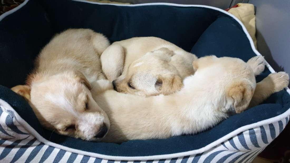 Die drei ausgesetzten Hundewelpen liegen in einem Körbchen im Tierheim Düsseldorf