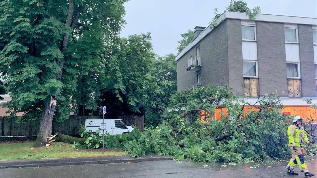 Der umgestürzte Baum in Grevenbroich.