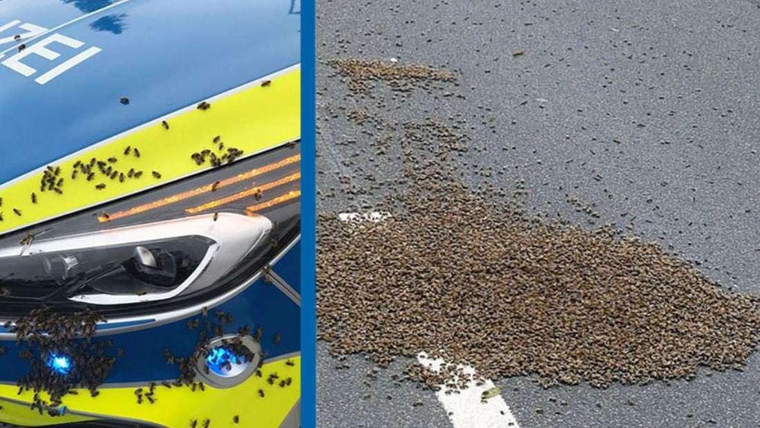 Links: Mehrere Bienen auf einem Polizeiauto. Rechts: Mehrere Bienen auf einer Straße.