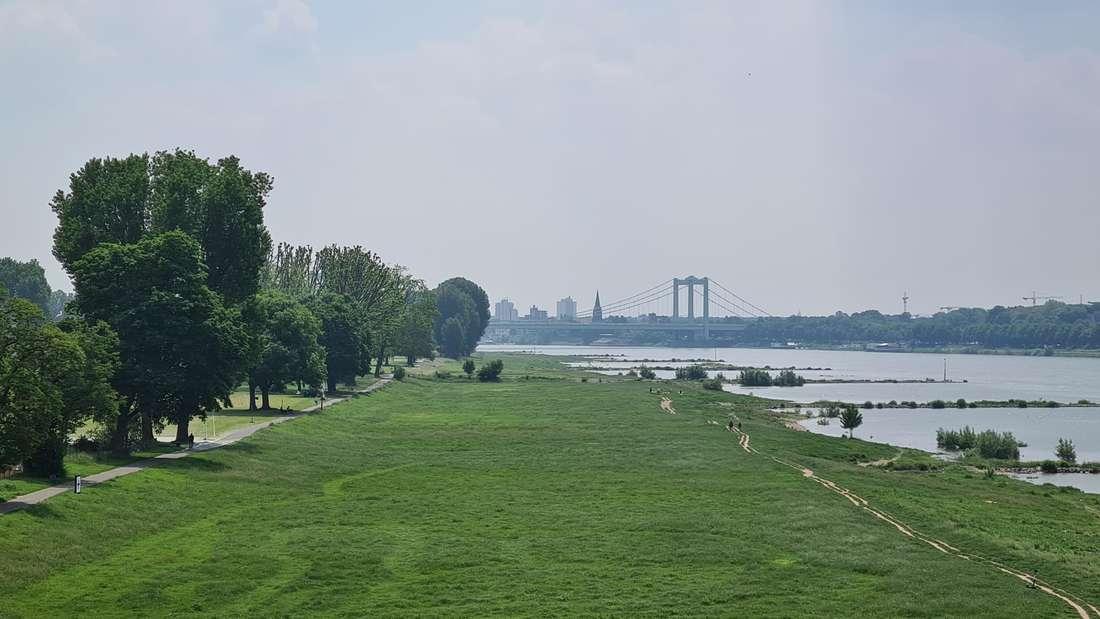 Grüne Poller Wiesen am Rhein, in Entfernung erkennt man die Rodenkirchener Brücke