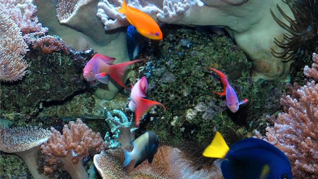 Aquarium im Kölner Zoo mit bunten Fischen