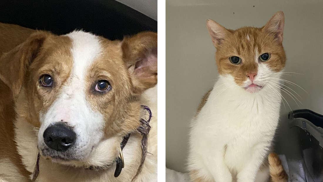 Ein Hund und eine Katze, die bei der Aktion gerettet worden sind.