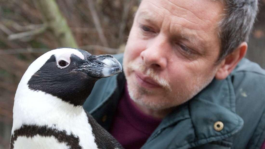 Pinguin Sandy