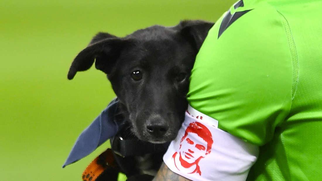 Deian Sorescu von Dinamo Bucharest hält einen Hund in den Armen.