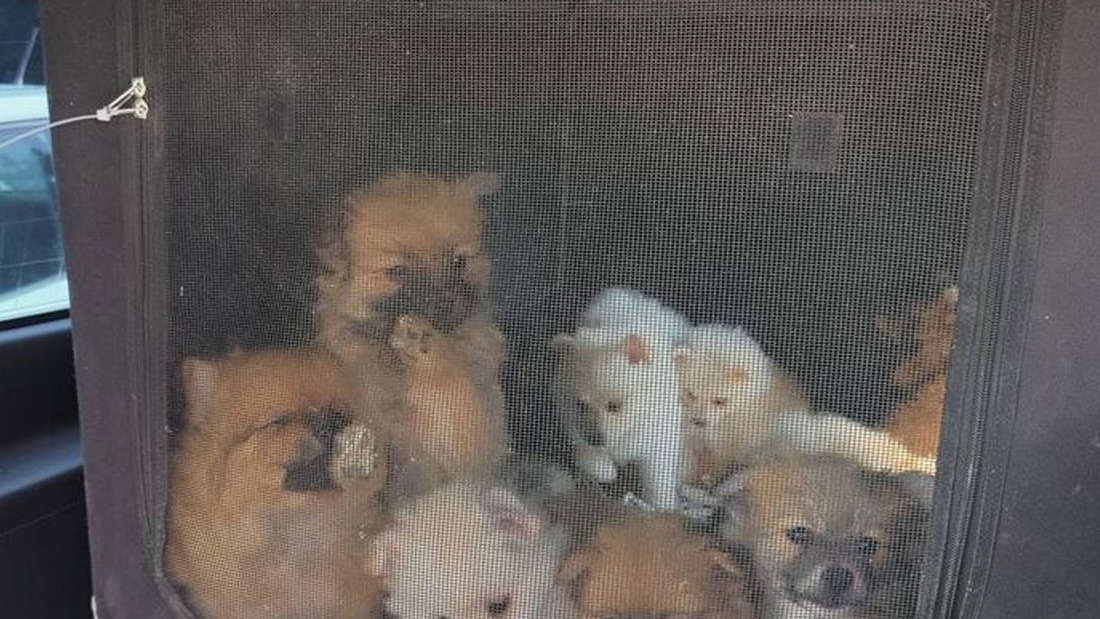Mehrere Hundewelpen sitzen in einer Transportbox.
