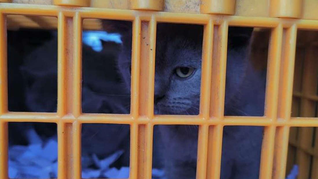Eine Katze in einer Transportbox der Polizei köln.